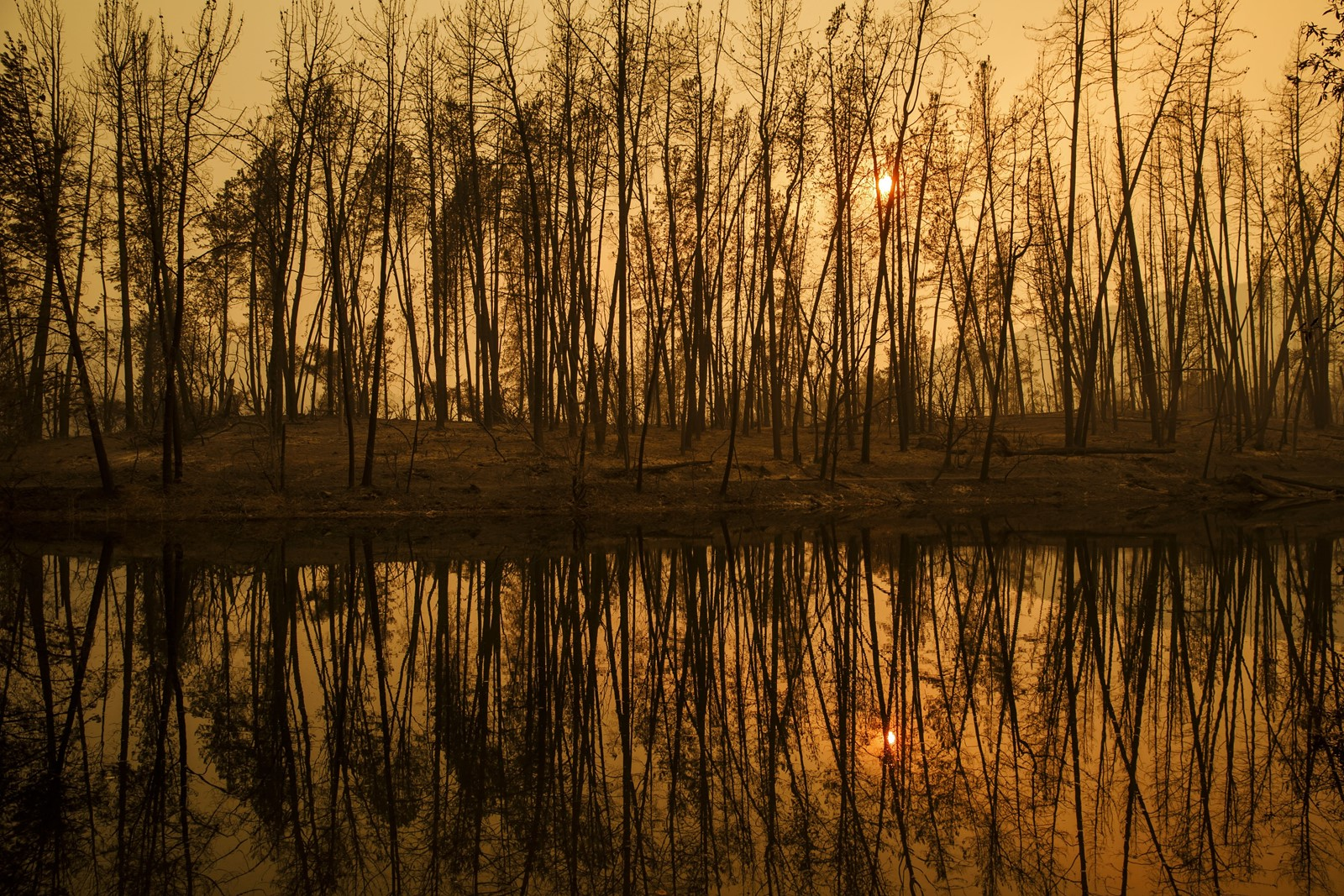 The sun sets among trees burned in Whiskeytown, California, near Redding, where the Carr fire has been raging since late July. — Photograph: Marcus Yam/Los Angeles Times.
