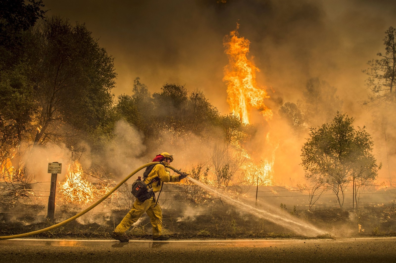 A firefighter sprays a backburn on Cloverdale Road near Igo on Saturday as scorching heat, winds and dry conditions persisted. — Photograph: Hector Amezcua/Sacramento Bee.